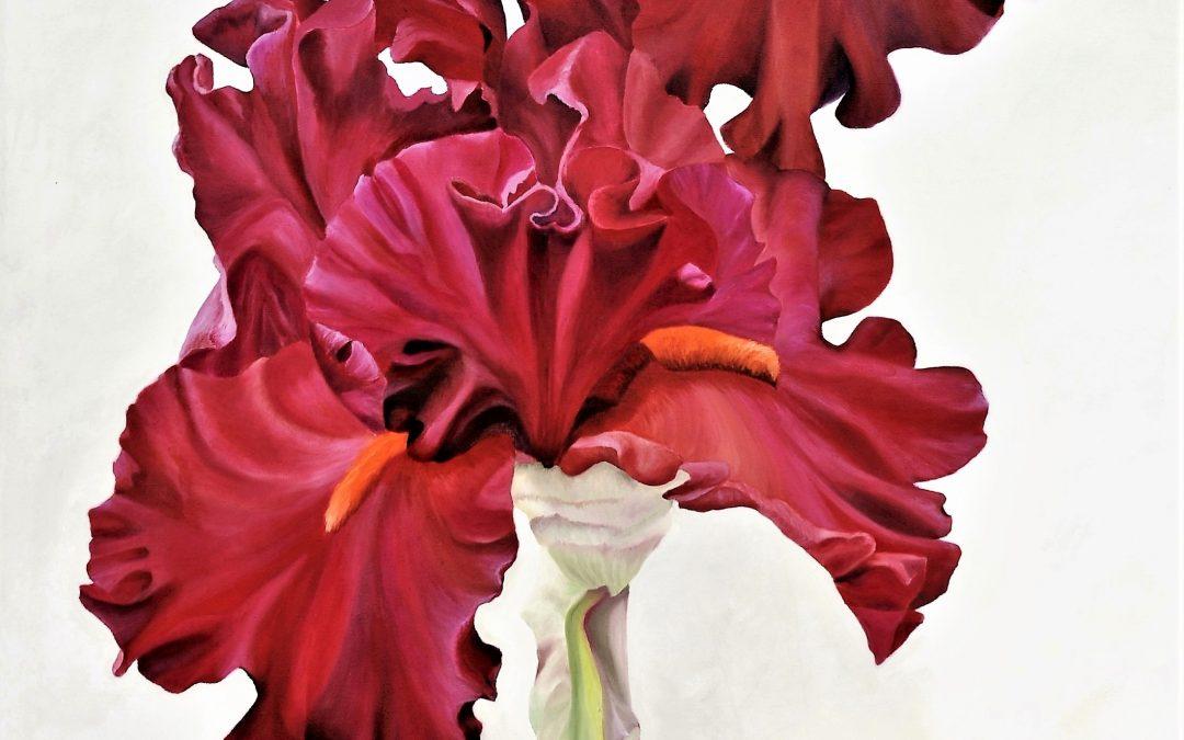 For iris lovers.